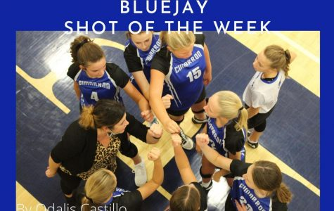 Bluejay Shot of The Week